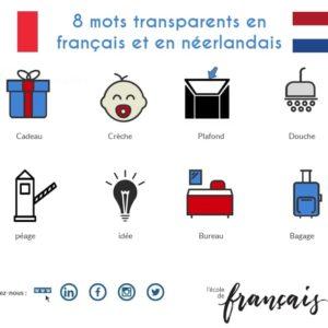 Les  mots transparents français / néerlandais